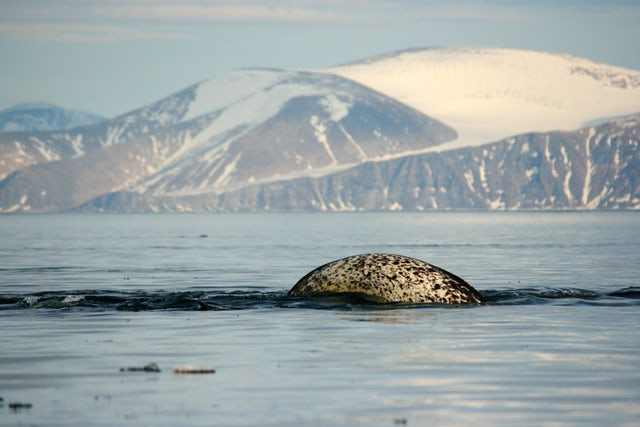 Arctic Deeply: Behind the Plan to Protect the Serengeti of the Arctic